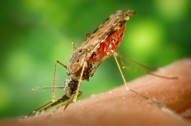 הדברת יתושים בחצר